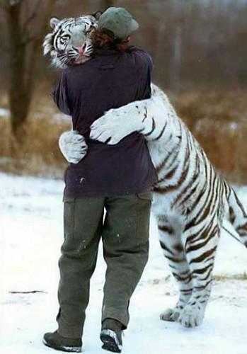Abbraccio Tigre-Uomo